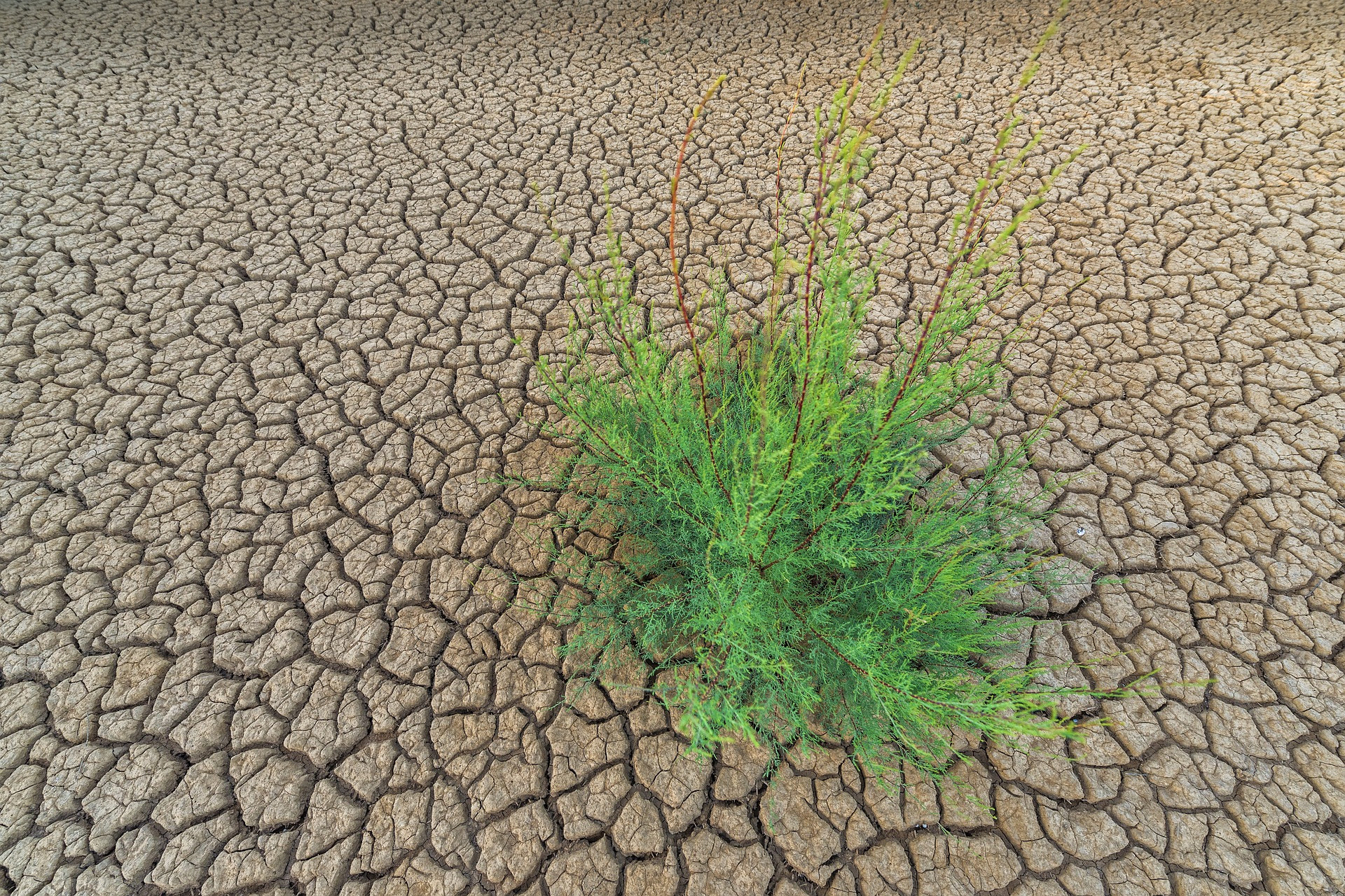 Desertification and drought in the world